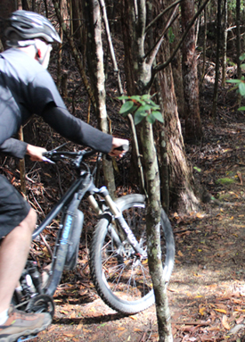 Tasmba Mountain Bike Adventures – North South Track Mt Wellington