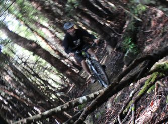 Tasmba North South Track Mt Wellington